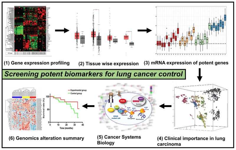 Systems Biology Integration and Screening of Reliable Prognostic Markers to Create Synergies in the Control of Lung Cancer Patients.